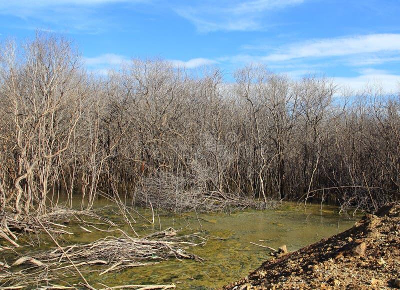 La dégradation de forêt de palétuvier images stock