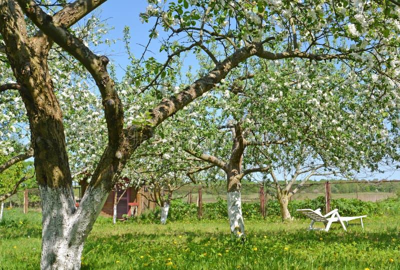 La dacha estacional con los Apple-árboles florecientes Primavera fotografía de archivo libre de regalías