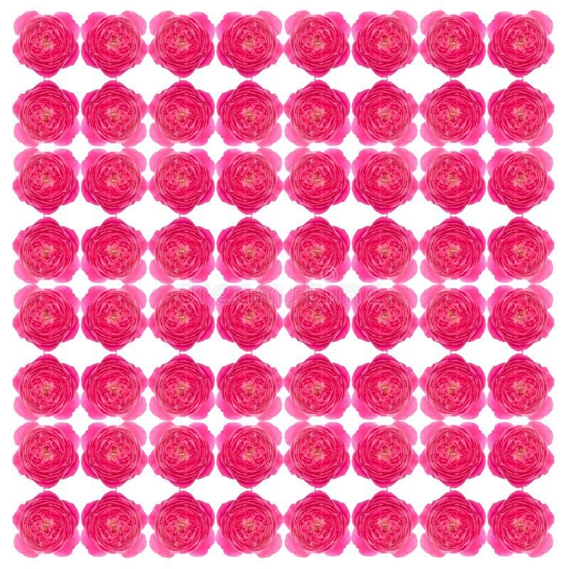 Download La damassé s'est levée image stock. Image du damassé - 56489311