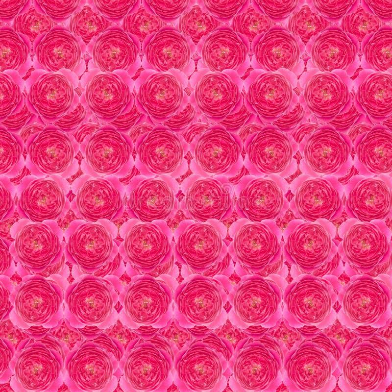 Download La damassé s'est levée photo stock. Image du féminin - 56489762
