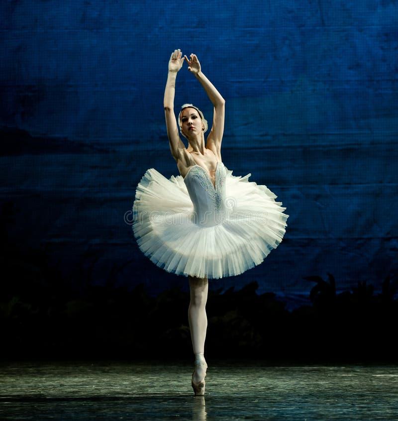 La danza blanca del cisne fotografía de archivo libre de regalías