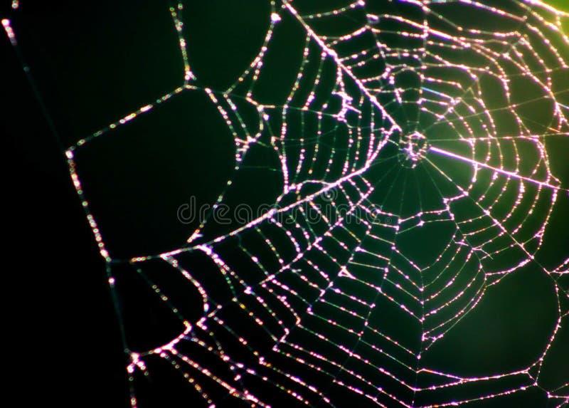 La danza de la araña imagenes de archivo