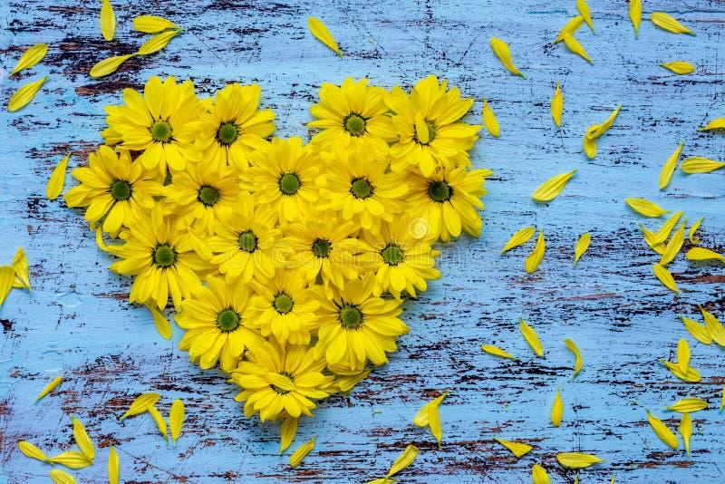 la De oro-margarita florece en forma del corazón en backg de madera azul fotografía de archivo libre de regalías