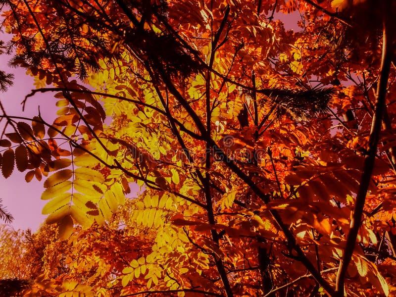 La decorazione variopinta del ramo di albero del parco di autunno lascia il fondo immagini stock libere da diritti