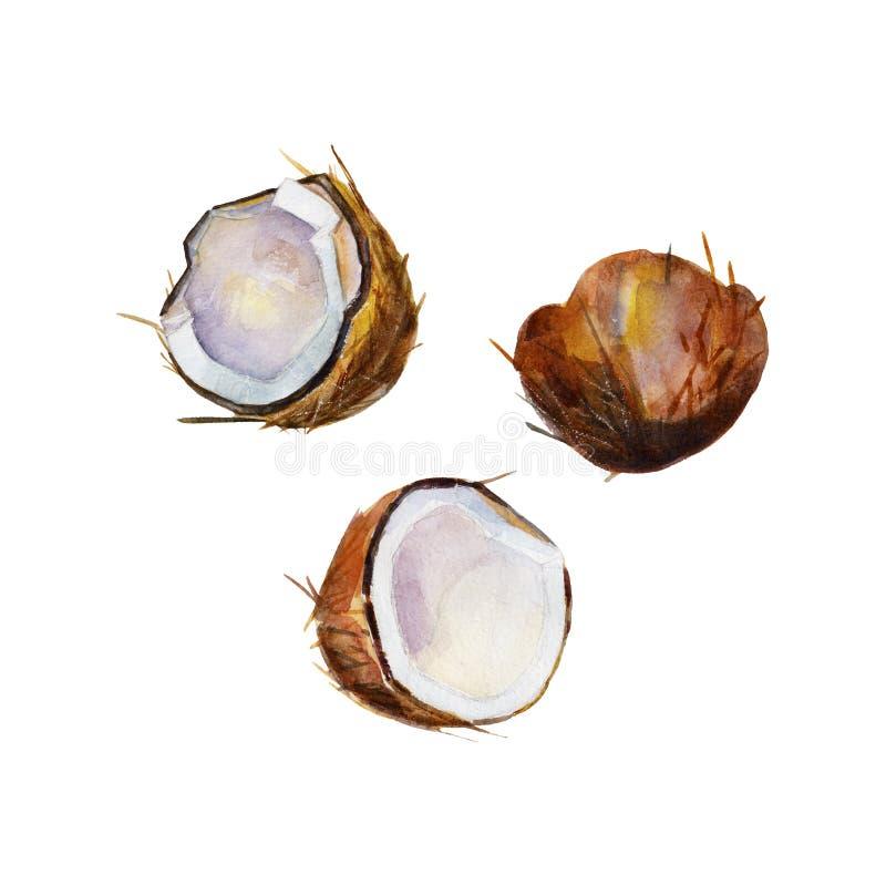 La demi noix de coco dans la perspective sur le fond blanc, ensemble d'illustration d'aquarelle illustration stock
