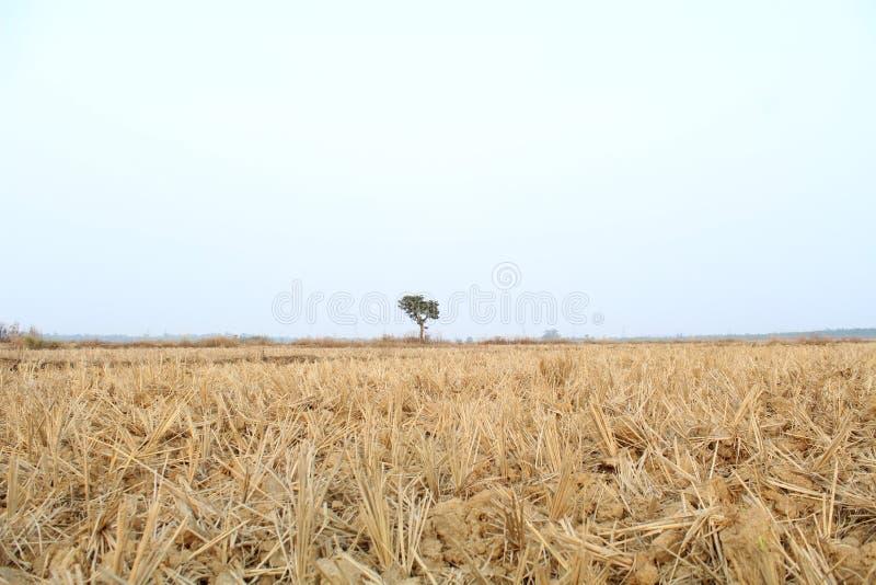 La demi terre, demi ciel photos libres de droits