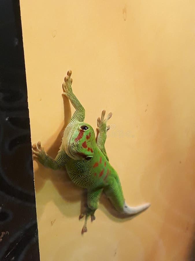 La demostraci?n de los reptiles en el museo de ciencia en G?nova fotografía de archivo