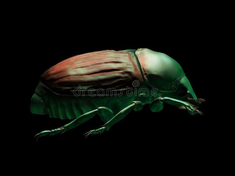 La derecha de escarabajo japonés fotografía de archivo libre de regalías