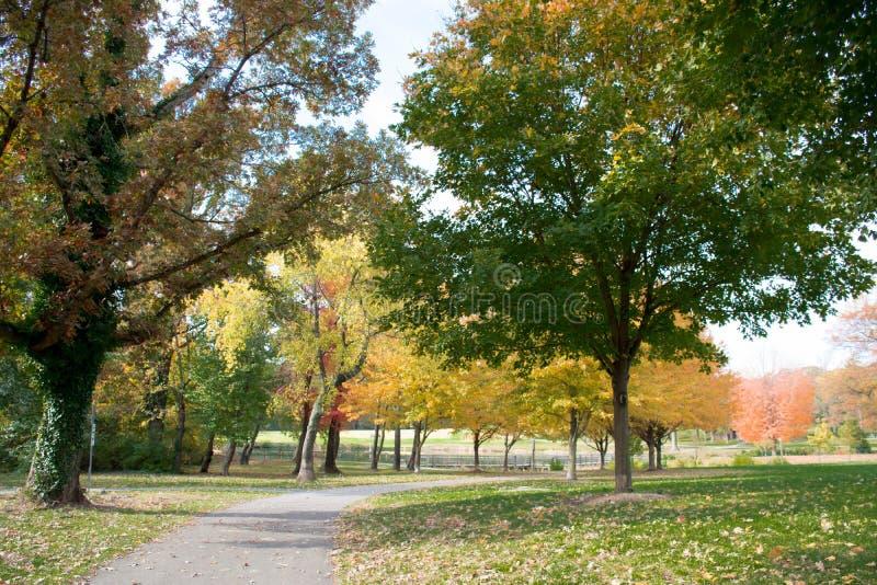 La derecha del paseo en la madera, a través de la hierba verde, los colores radiantees anaranjados del otoño mintió en la hierba foto de archivo