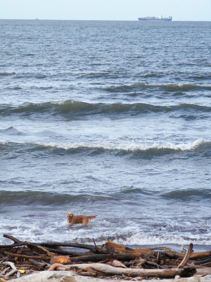 La desesperación de un perro en un aun encendió paisaje en la playa de Veracruz en México central fotos de archivo