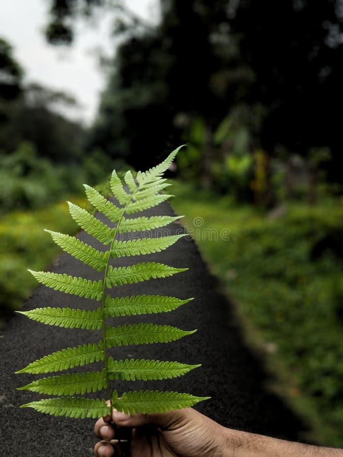 La destination verte images stock