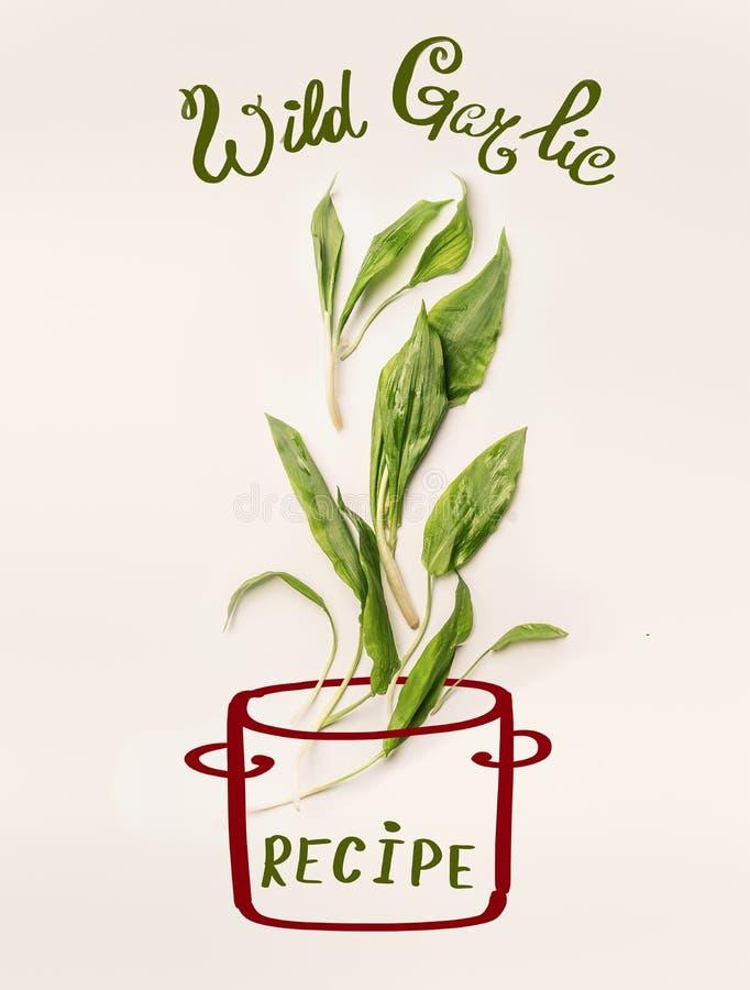 La disposición creativa con el pote de cocinar pintado y el ajo salvaje verde fresco se va en el fondo blanco fotos de archivo libres de regalías