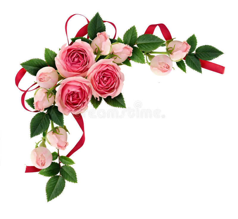 La disposition de fleurs et de bourgeons de rose de rose et le ruban de soie cintrent photo libre de droits