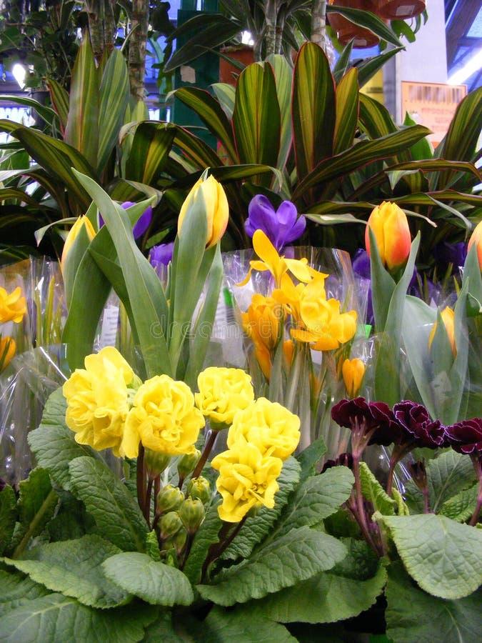 La disposizione variopinta della primavera fiorisce, fondo di Pasqua fotografia stock libera da diritti