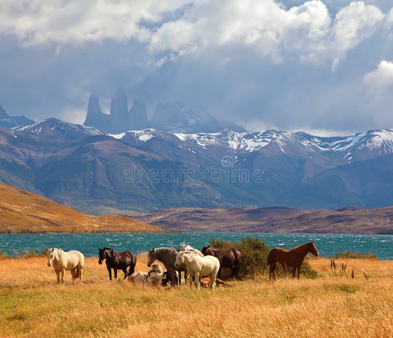 La distance sont vues trois roches Torres del Paine photo libre de droits