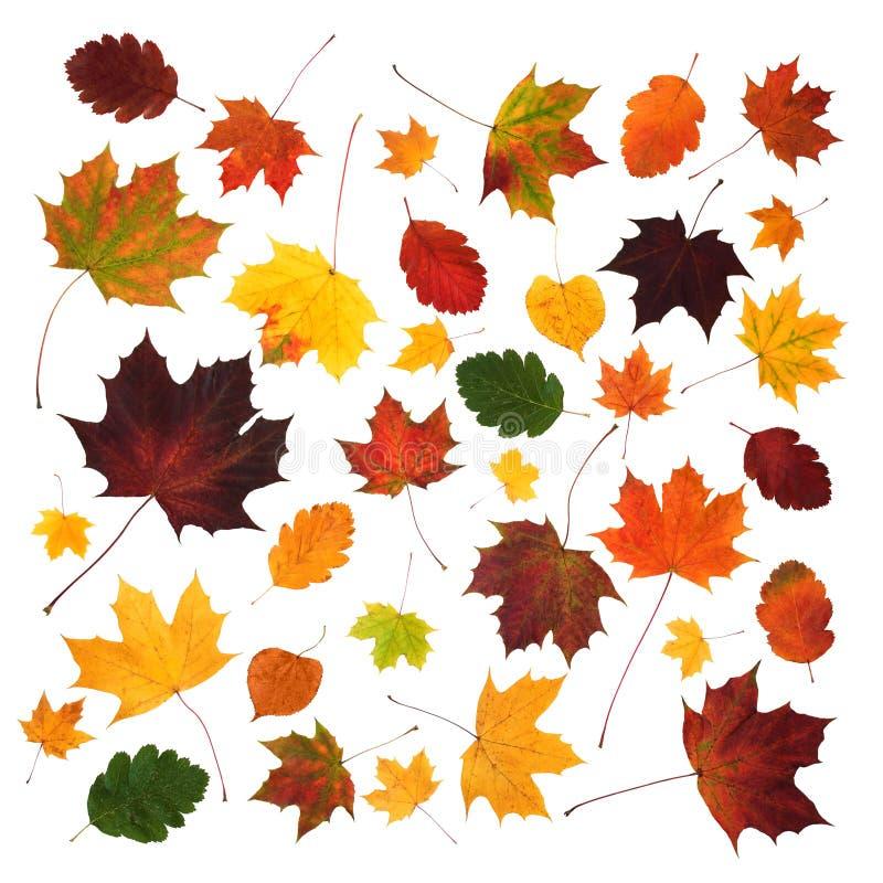 La diversa caída colorida deja la composición abstracta aislada foto de archivo