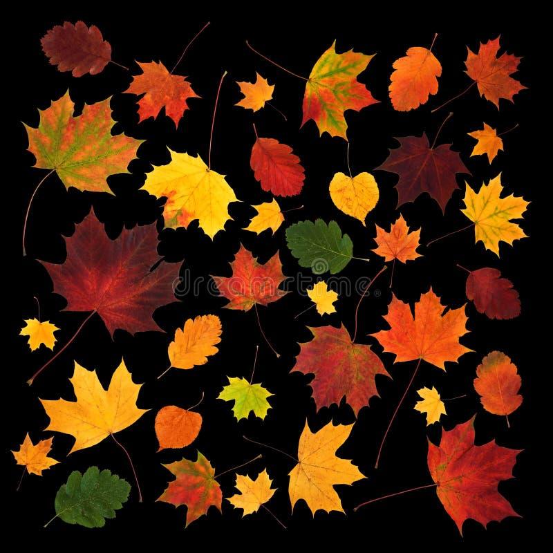 La diversa caída colorida deja la composición abstracta foto de archivo libre de regalías