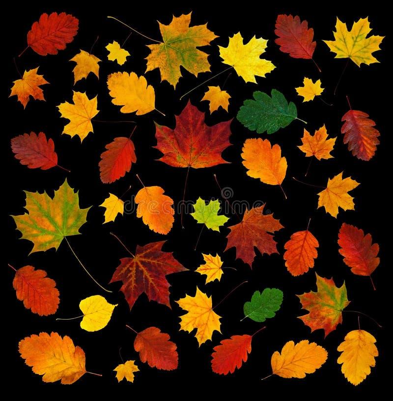 La diversa caída colorida deja la composición abstracta aislada en negro fotografía de archivo libre de regalías