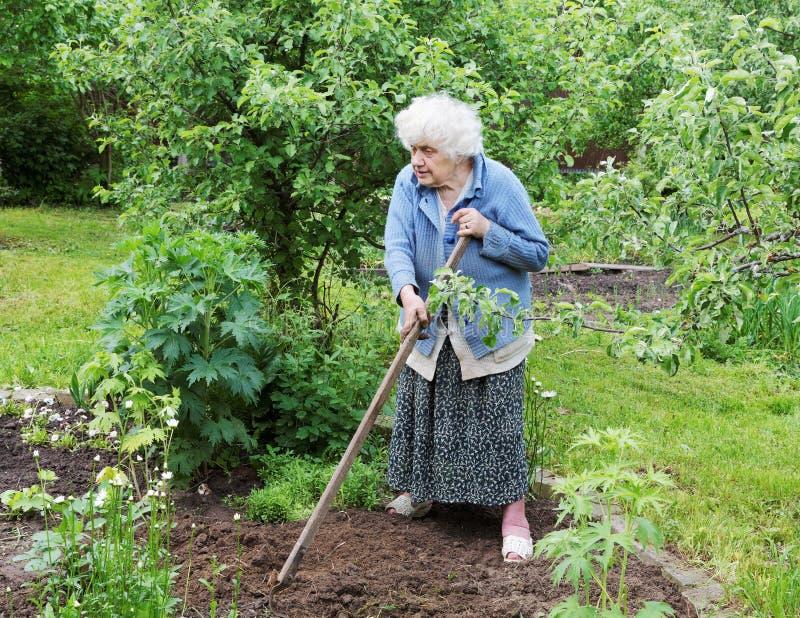 La donna anziana con un selettore rotante lavora in un giardino fotografia stock