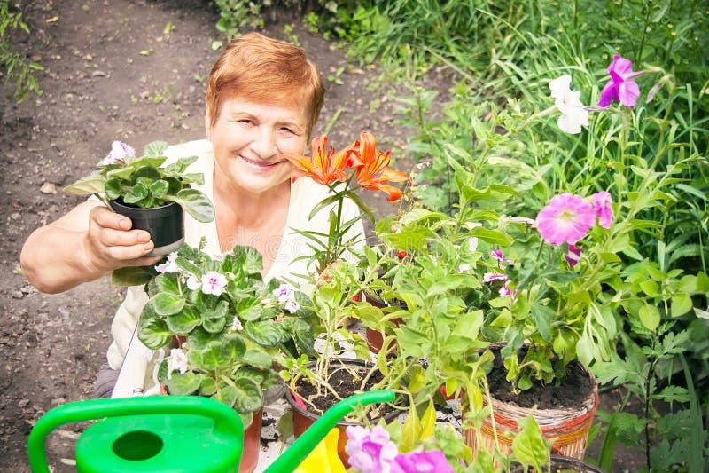 La donna anziana senior attiva del giardiniere sta tenendo il vaso di flowe immagine stock libera da diritti