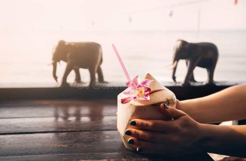 La donna beve le noci di cocco fresche dolci fotografia stock