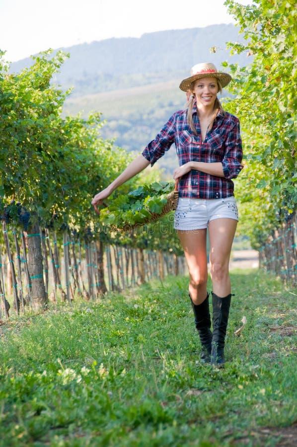 La donna cammina con la raccolta dell'uva fotografia stock