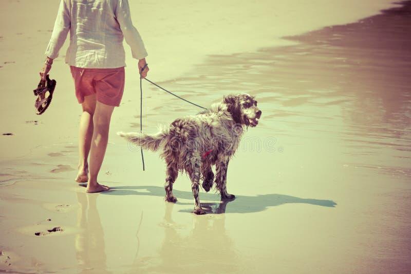 La donna cammina il cane alla spiaggia immagini stock