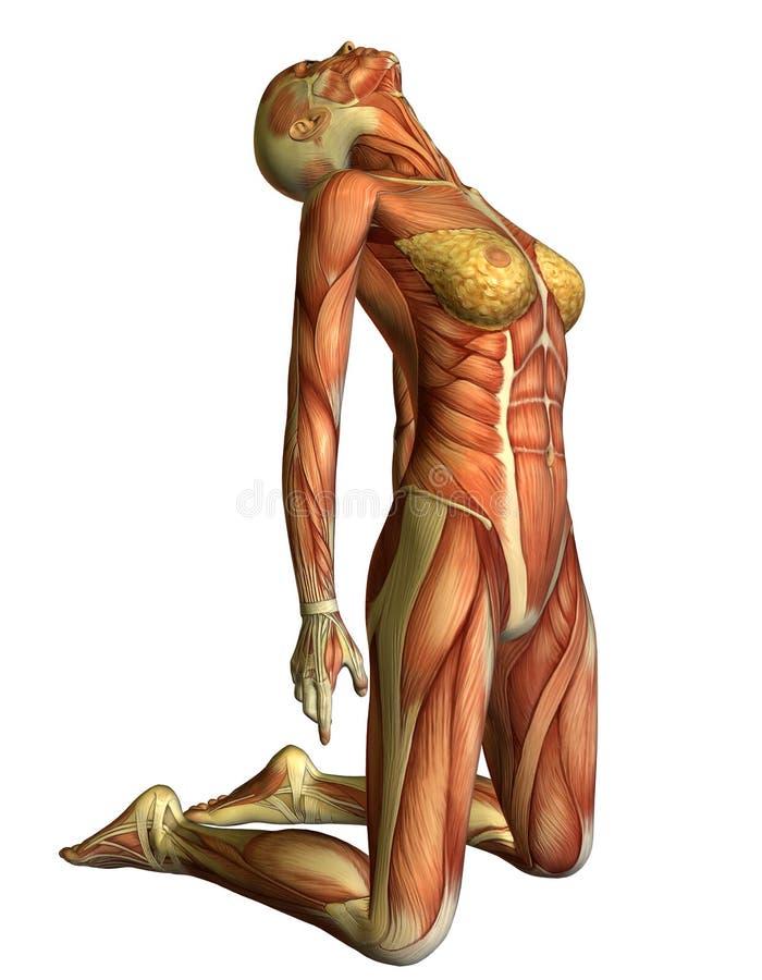 La donna del muscolo sulle sue ginocchia si dirige indietro illustrazione di stock