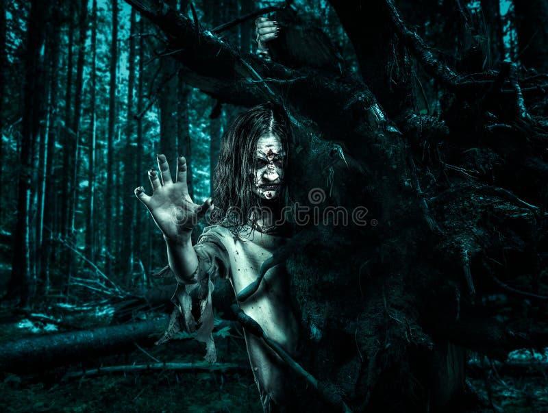 La donna del non morto di orrore guarda fuori da dietro un albero fotografia stock
