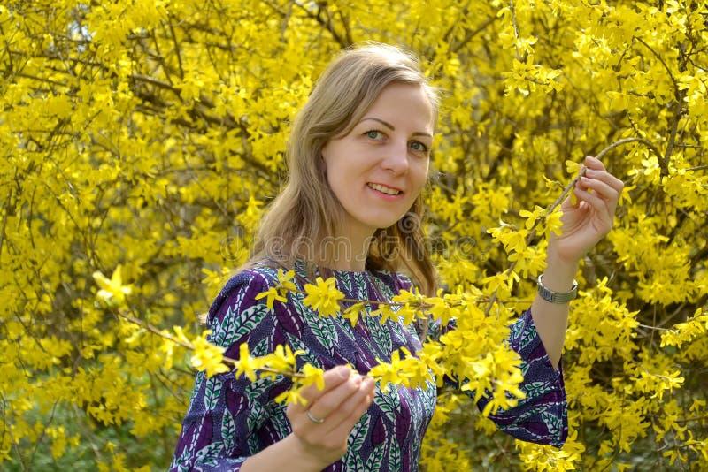 La donna di trenta anni ammira i fiori dell'forsythia Ritratto fotografia stock libera da diritti