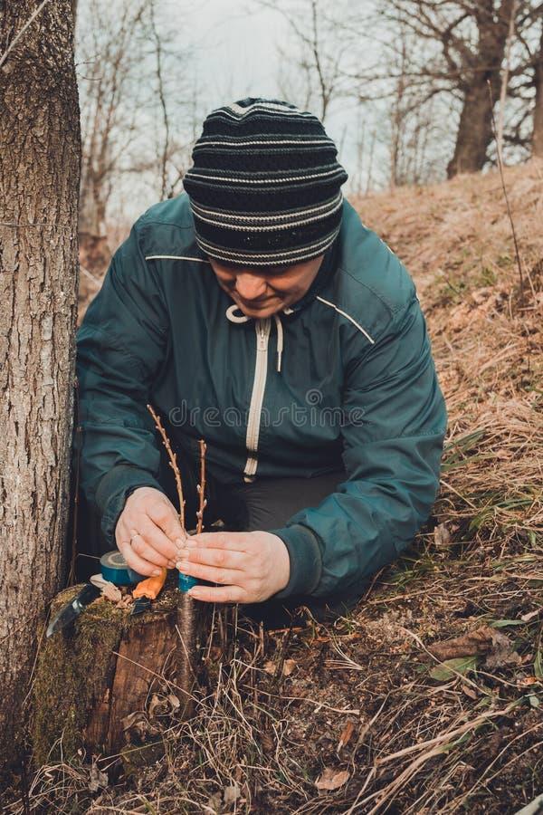 La donna di un giardiniere ostruisce una parte di taglio dell'albero innestato per evitare la decomposizione a questo posto in pr immagine stock