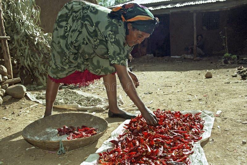 La donna etiopica sta asciugando i peperoni a casa immagini stock