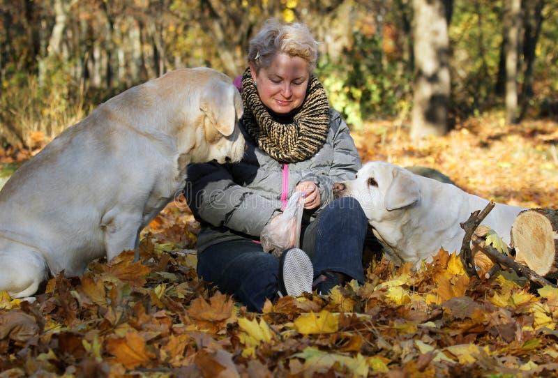 La donna felice con Labradors giallo in Autumn Park In il giorno soleggiato fotografia stock libera da diritti