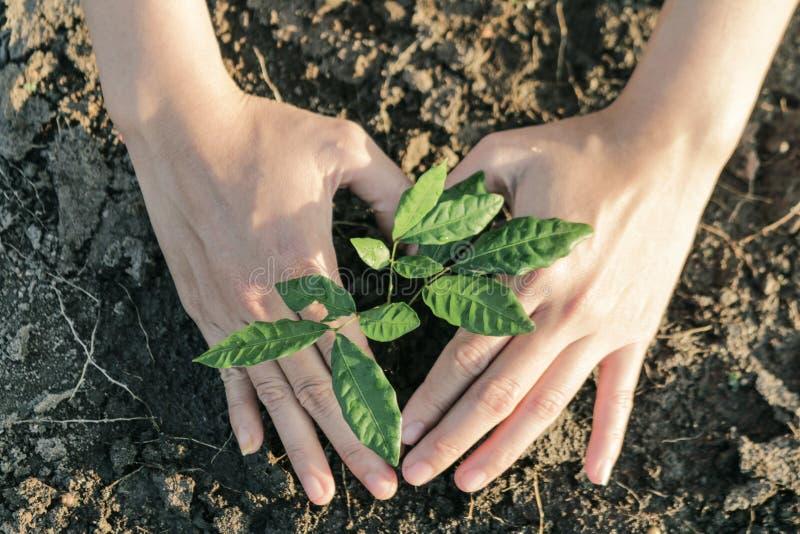 La donna ha piantato un albero su una terra colpita dalla siccità immagine stock