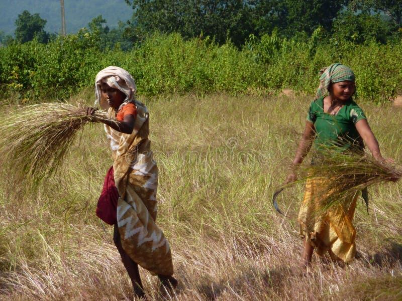 La donna indiana utilizza una falce immagine stock