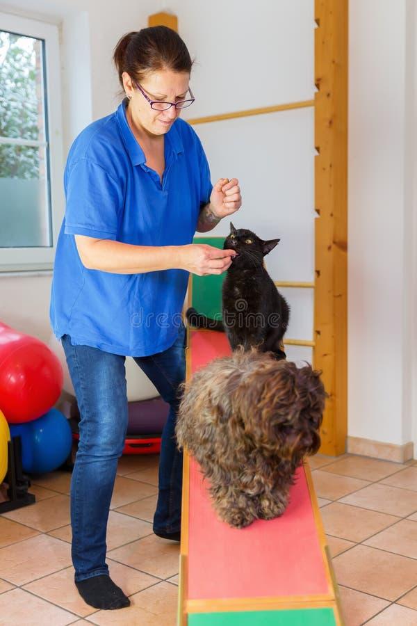 La donna lavora con un gatto e un cane in un ufficio animale della fisioterapia immagine stock libera da diritti
