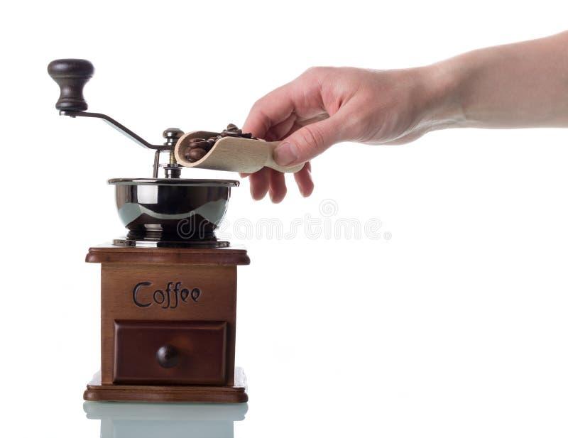La donna mette il grano in macinacaffè manuale isolato su bianco immagine stock