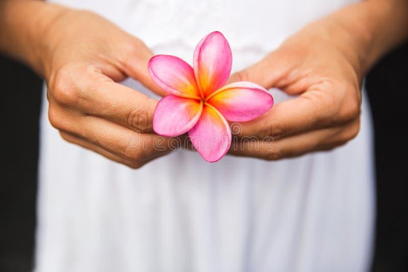 La donna passa il fiore di plumeria della tenuta sul vestito bianco immagini stock