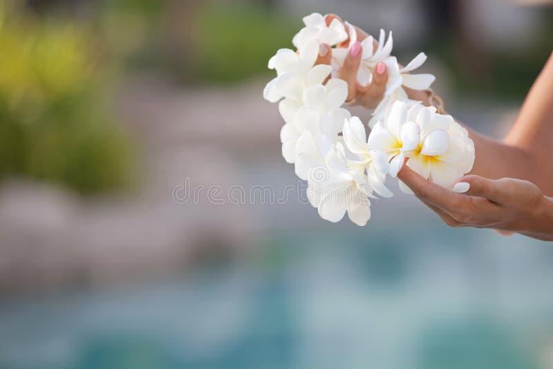 La donna passa la ghirlanda dei leu del fiore della tenuta della plumeria bianca immagini stock libere da diritti