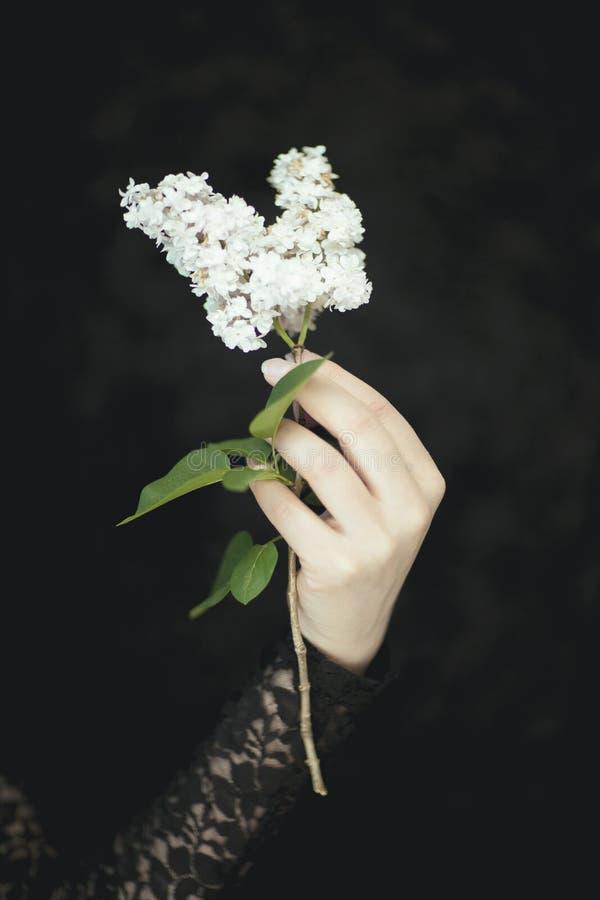 La donna passa la tenuta dei fiori lilla bianchi freschi, colpo rurale sensuale molto scuro dello studio fotografia stock libera da diritti