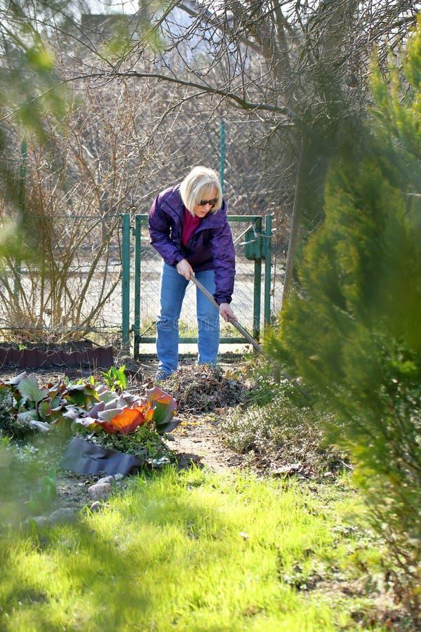 La donna pulisce il giardino in molla in anticipo fotografia stock libera da diritti
