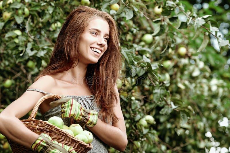 La donna rompe le mele in un frutteto fotografie stock