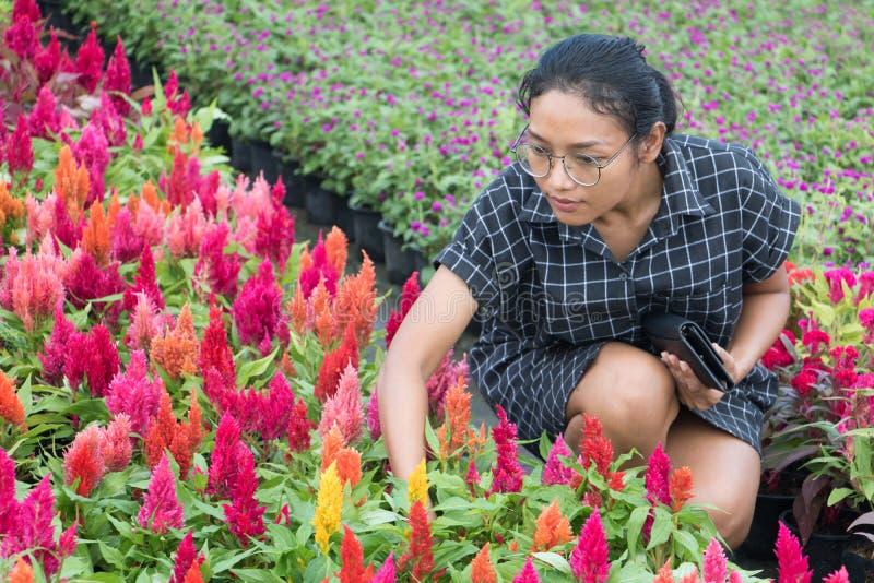 La donna sceglie i fiori nel giardinaggio immagini stock libere da diritti
