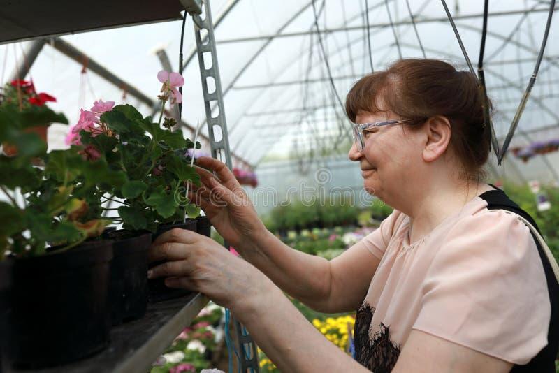 La donna senior sceglie i fiori fotografie stock
