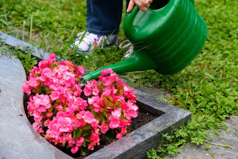 La donna sta innaffiando i fiori su una tomba fotografia stock libera da diritti