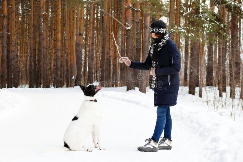 La donna sta preparando il suo cane in bianco e nero su un fondo della foresta dell'inverno immagini stock libere da diritti
