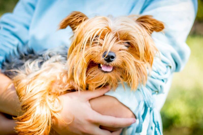 La donna tiene il cane irsuto un rerrier_ del Yorkshire delle razze immagine stock libera da diritti