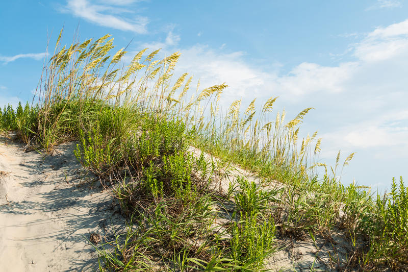 La duna di sabbia erbosa sulla spiaggia di Coquina a brontola la testa fotografia stock libera da diritti
