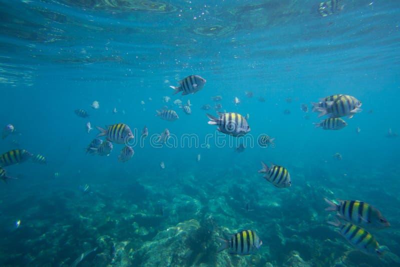 La durata subacquea del mar dei Caraibi immagini stock libere da diritti