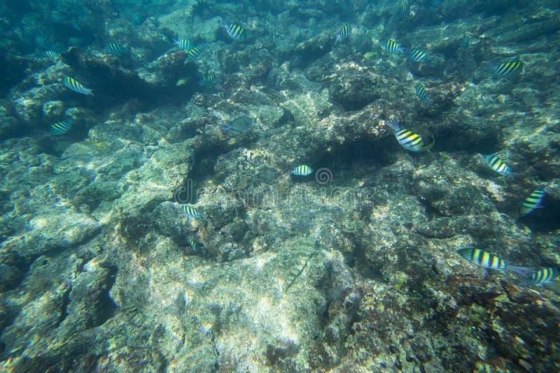 La durata subacquea del mar dei Caraibi fotografia stock